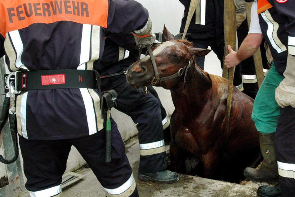 Die Feuerwehr konnte die Tiere aus der Grube befreien. (Archivbild)