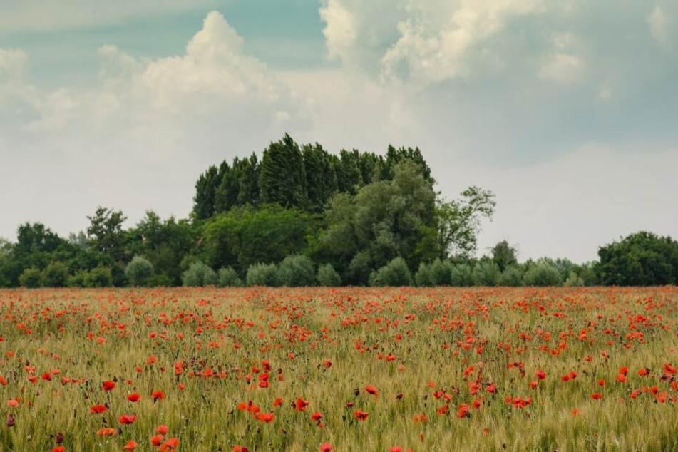 Die Sicht eines Menschens: rote, blaue und grüne Farbtöne werden wahrgenommen.