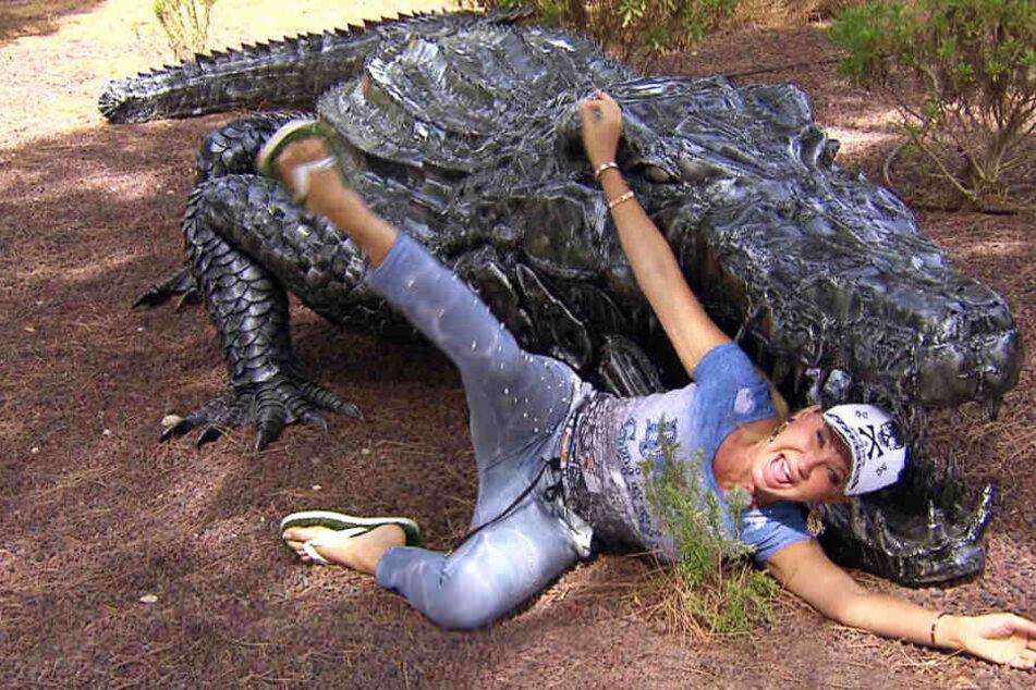 Auch dieses sechs Meter lange Krokodil befand sich in den Kisten aus Thailand.