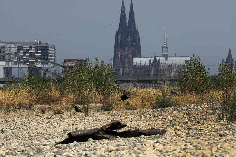 "Köln ruft ""Klimanotstand"" aus"
