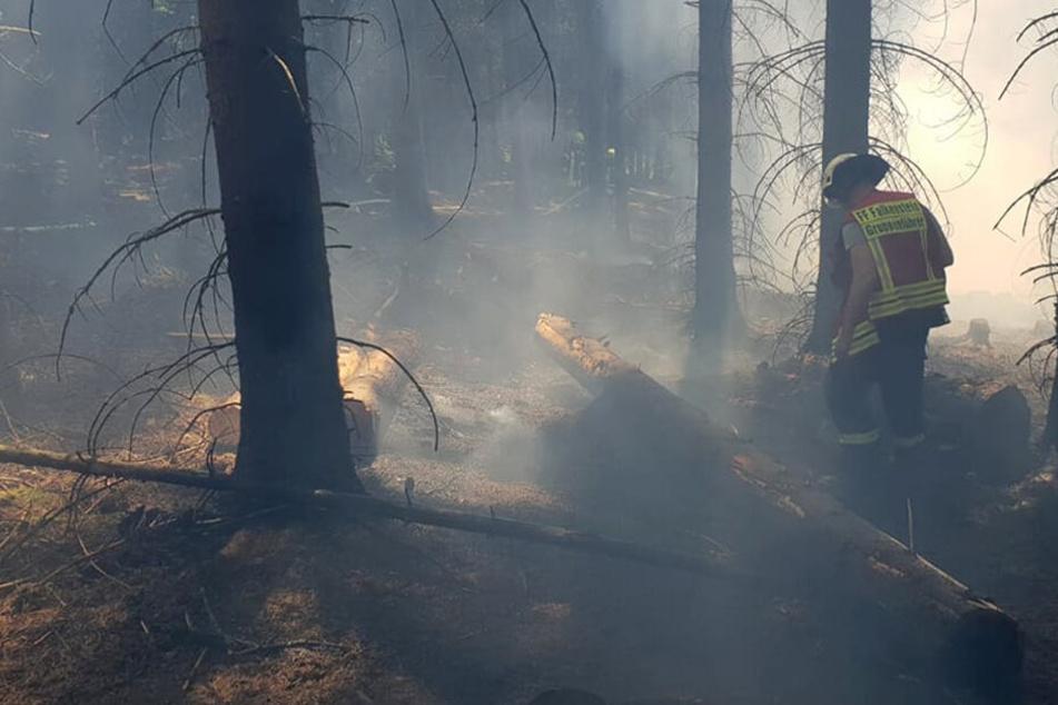Mehrere hundert Quadratmeter Wald in Flammen