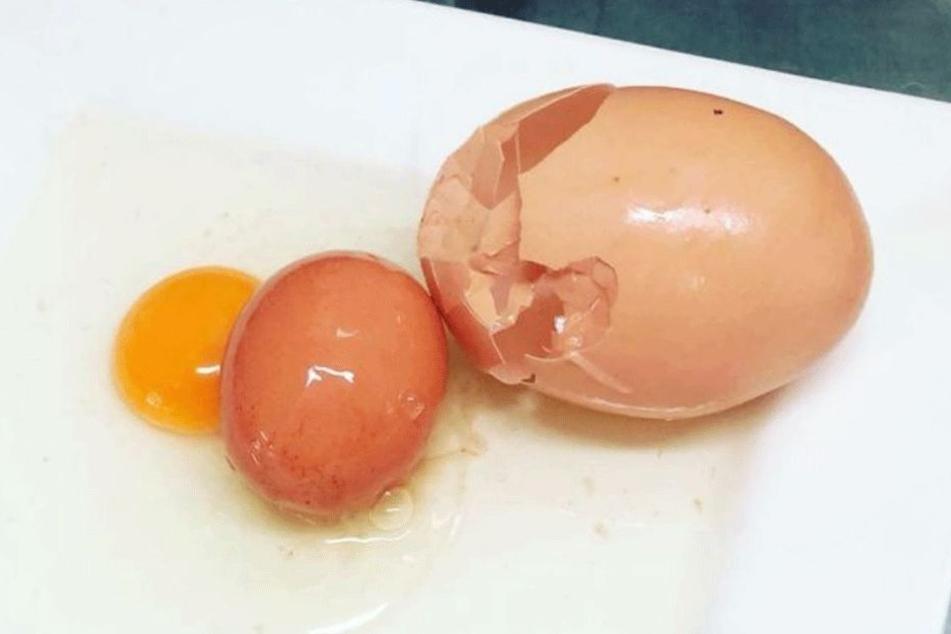 Unglaublich: In dem riesigen Ei befand sich ein normal großes Ei.