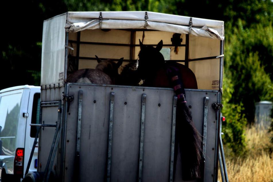 Schwerer Unfall mit Pferdeanhänger: Vier Schwerverletzte und ein totes Tier