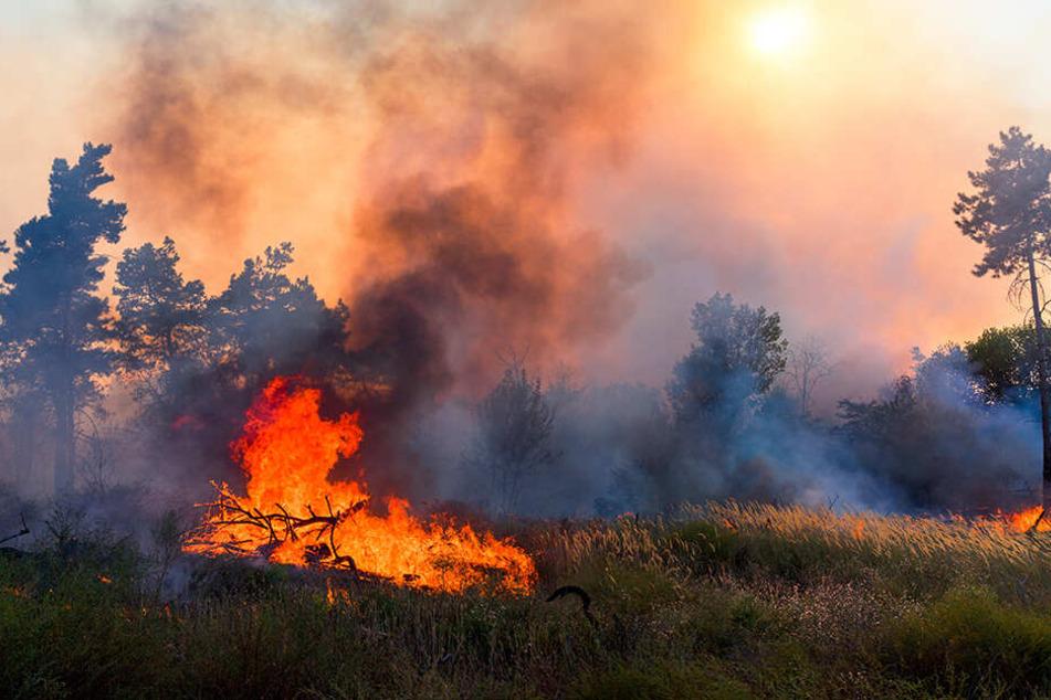 2018 loderten wegen anhaltender Trockenheit und Hitze weltweit Feuer.