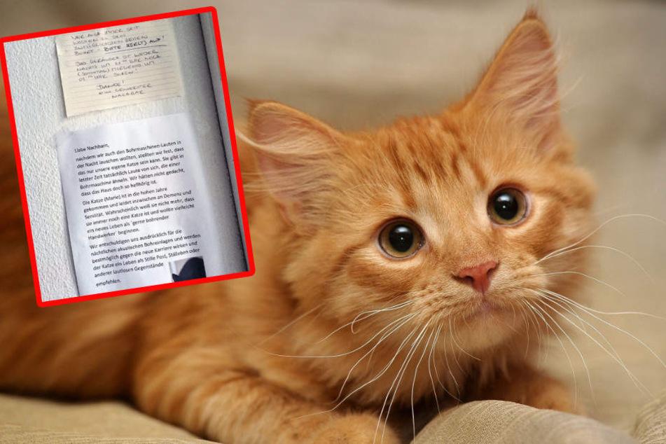 Berlin: Katze hält sich für Bohrmaschine und entnervt Nachbarn