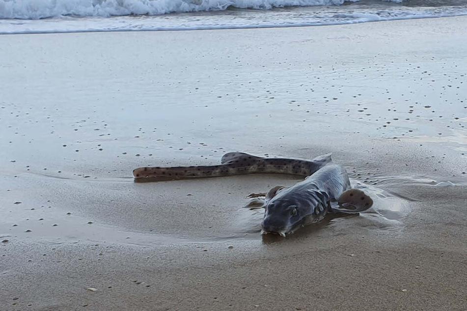 Diese Kreatur wurde an einem australischen Strand angespült.