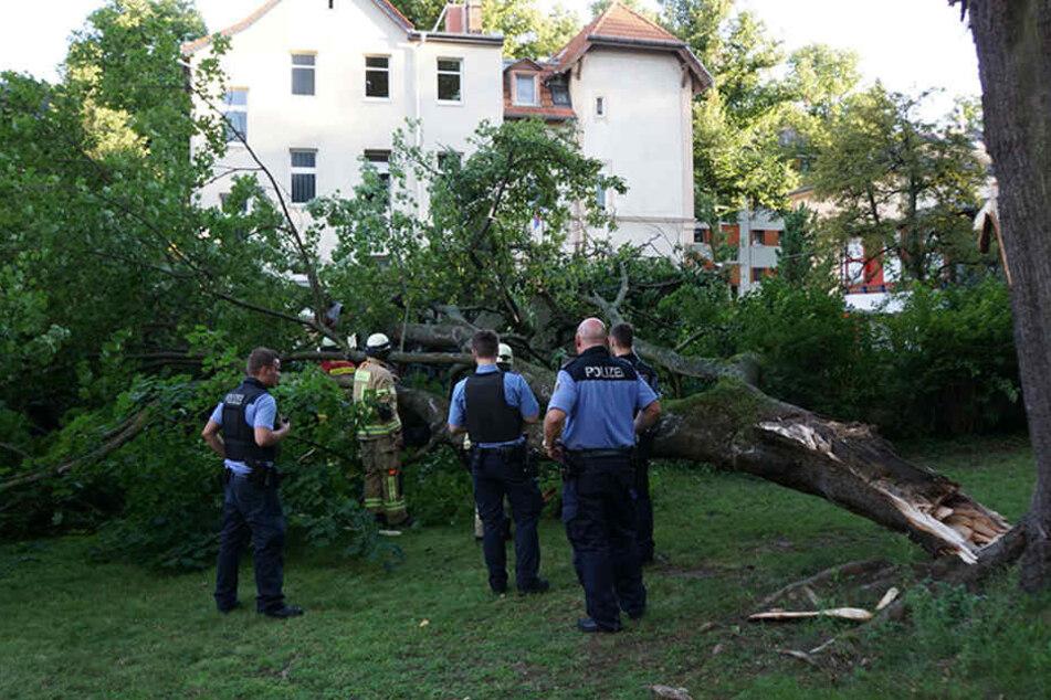 Der Ast, der die Ausmaße es eigenständigen Baums hatte, erwischte den älteren Mann völlig überraschend im Hinterhof.