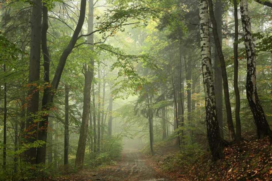 Die schreckliche Tat fand in einem Wald bei Velbert statt (Symbolbild).
