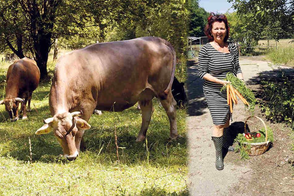 Dresden: Saxonia-Chefin Viola Klein hat ein Herz für alte Kühe