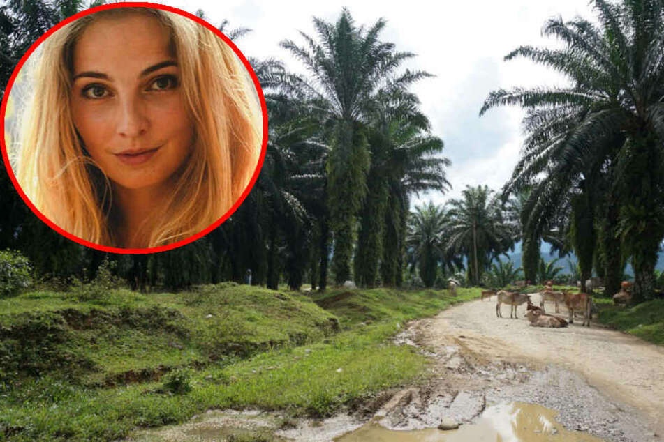 Das Problem mit dem Palmöl: Was steckt dahinter?