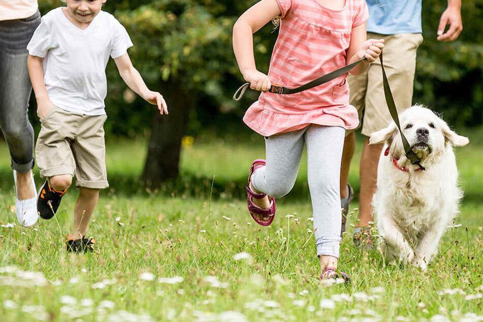 Die Familie war gerade mit ihrem Hund spazieren, als sie das Gold fanden. (Symbolbild)
