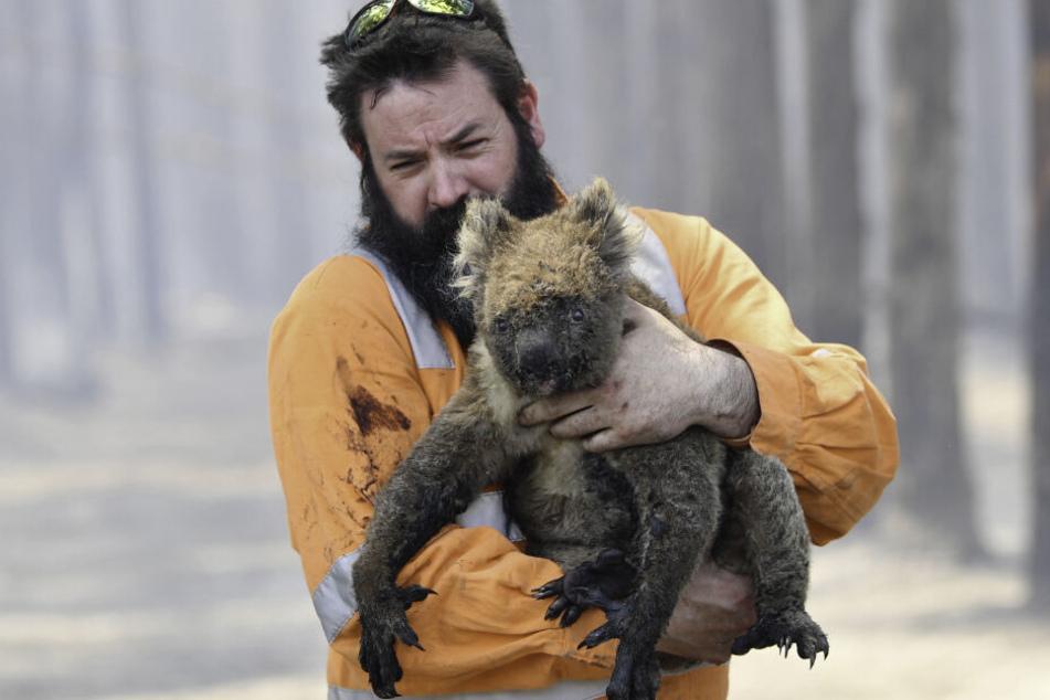 Aufopferungsvoll kämpfende Menschen versuchen, möglichst viele Tiere zu retten.