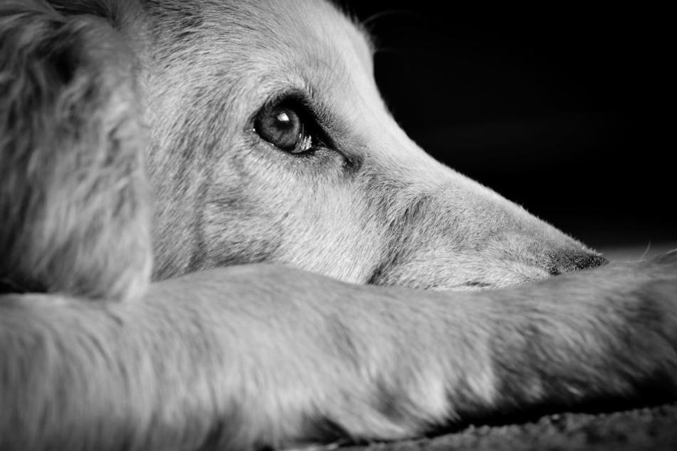 Wer war der grausame Schläger? Und war es sein eigener Hund?