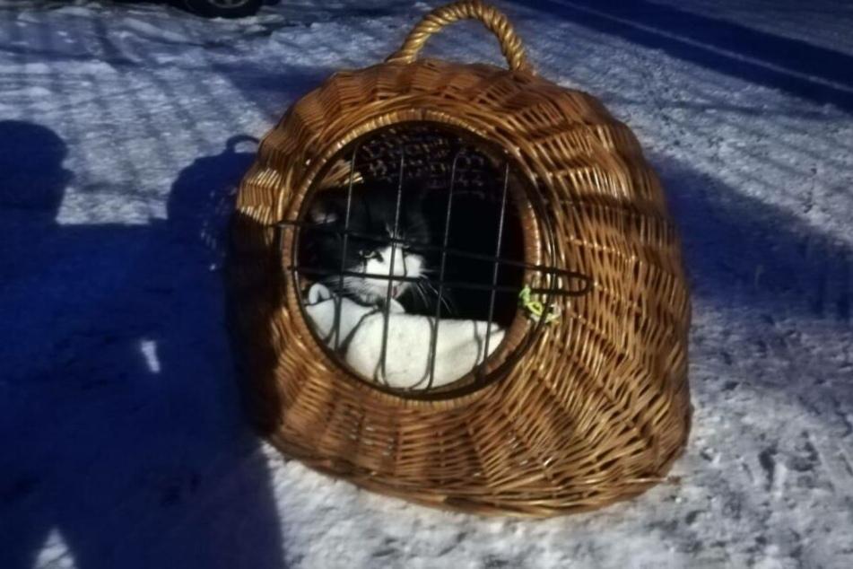 Der alte Kater wurde in der eiskalten Nacht zurückgelassen.