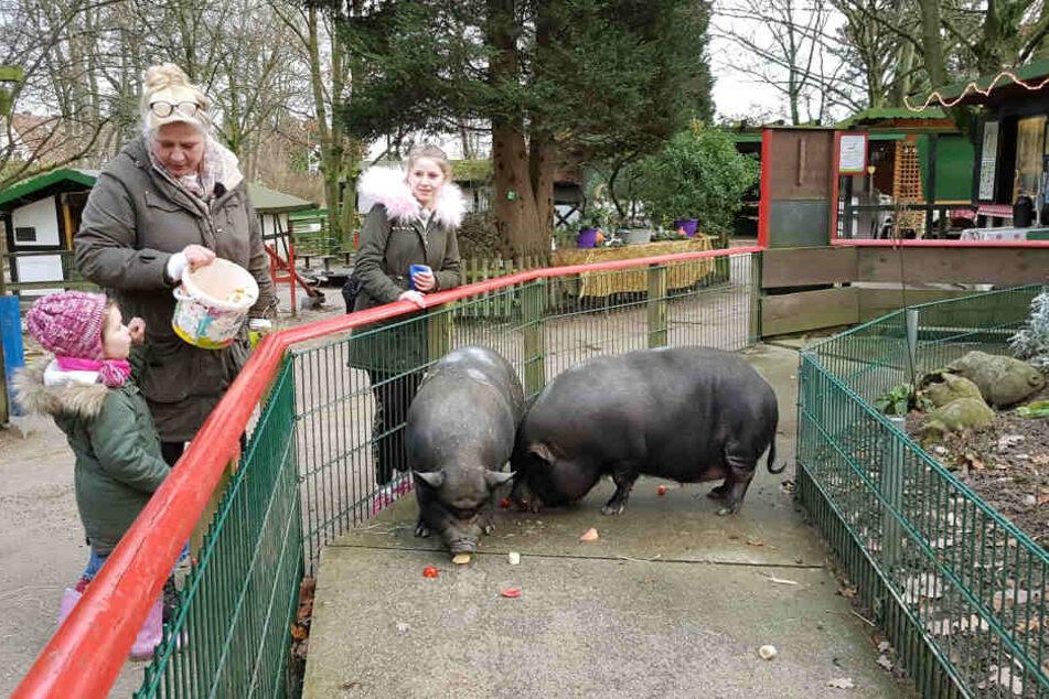 Um den Kopf frei zu bekommen unternimmt Silvia mit Enkelin Celina und Tochter Loredana einen Ausflug in einen Tierpark.