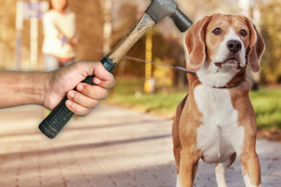 Einem Hundehalter soll der 29-Jährige mit einem Hammer auf den Kopf geschlagen sowie ein Kind und einen Hund getreten haben (Symbolbild).