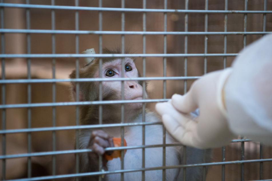 Bei den Tests in Tübingen ging es um Forschung am Hirn der Tiere. (Archivbild)