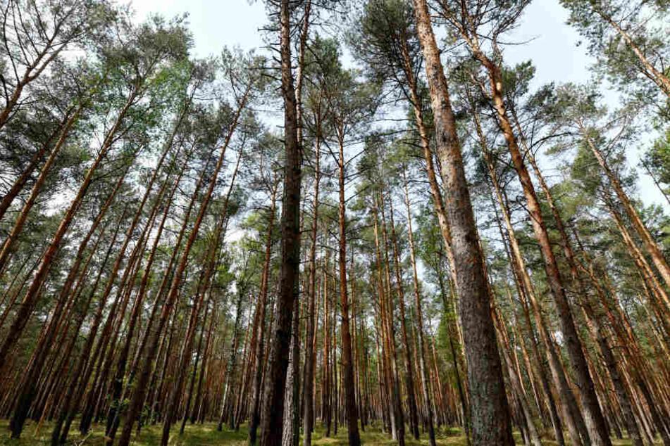 Der tote Mann wurde von Spaziergängern in einem Waldstück gefunden.