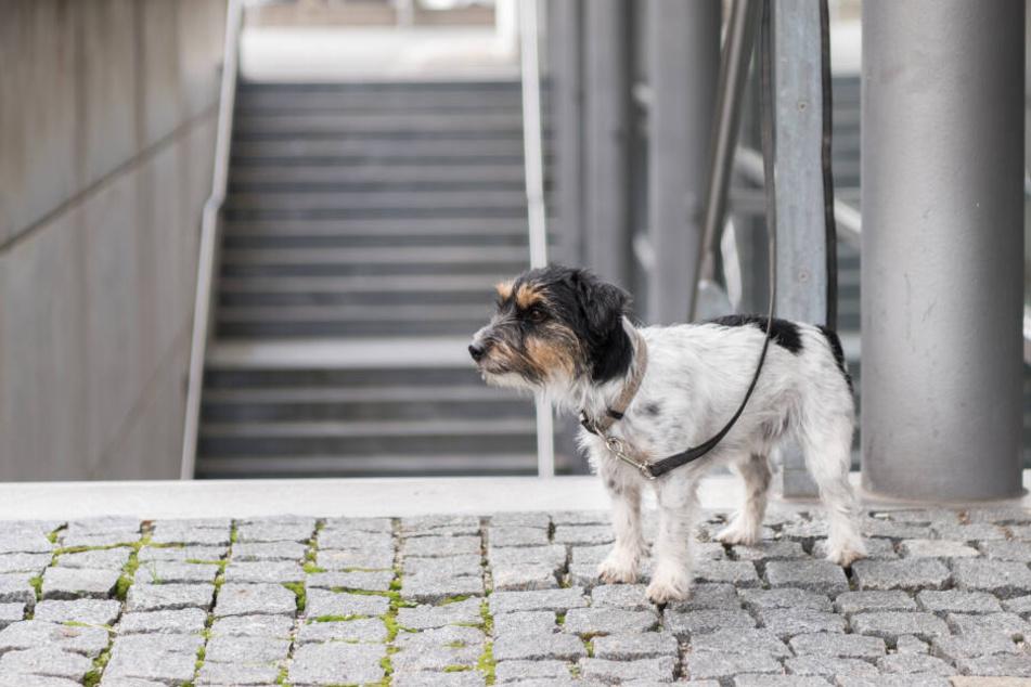 Wenn Hunde vor einem Geschäft angebunden werden, sind sie ohne Schutz und fremden Menschen völlig ausgeliefert.