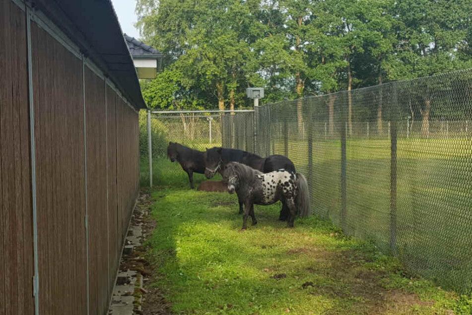 Unter den Gästen waren auch vier Ponys.