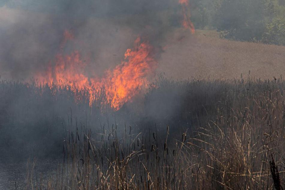 Das Feuer brach auf einem Getreidefeld im sächsischen Schmölln-Putzkau aus.