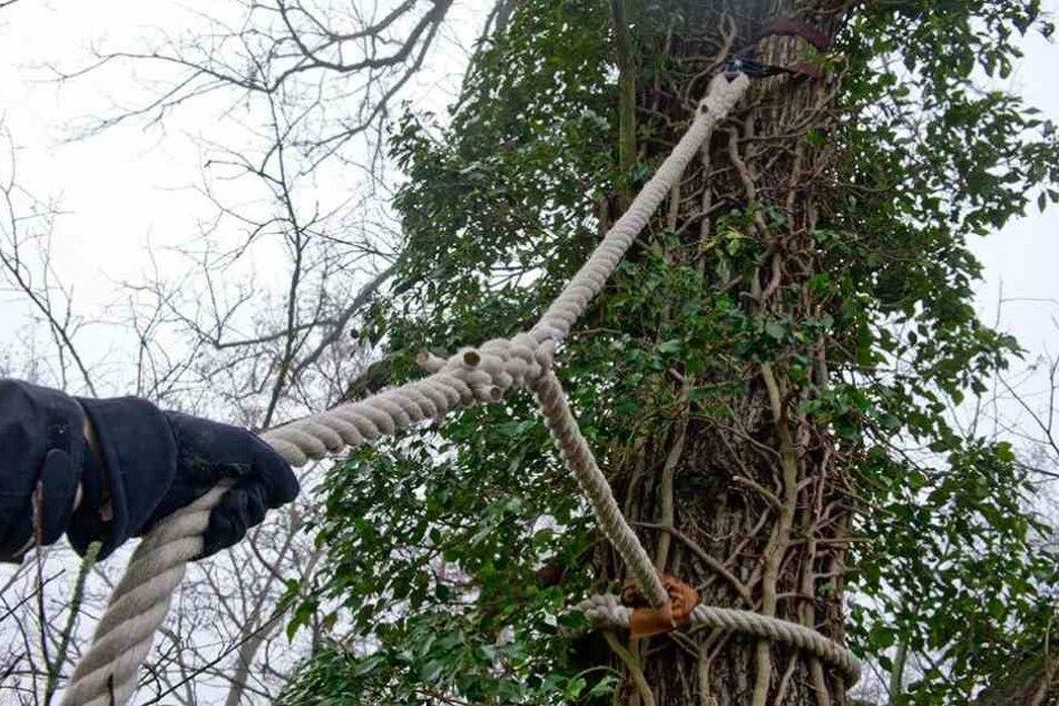 Über eine Straße war in knapp einem Meter Höhe ein Seil gespannt (Symbolbild).