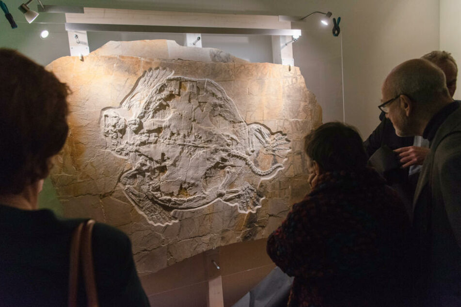Besucher des Naturkundemuseums begutachten das neu präsentierte Fossil.