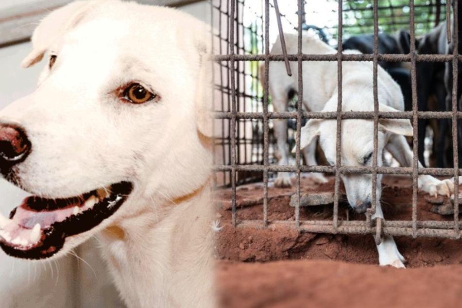 Hund versucht aus Käfig von Schlachthaus zu entkommen: Wird er es schaffen?