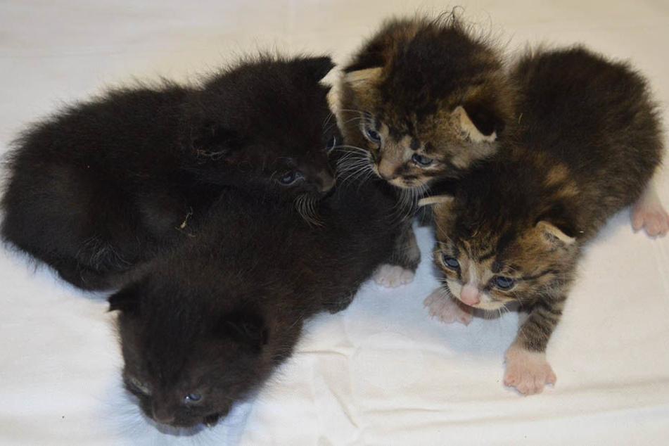 Diese süßen Katzenbabys brauchen Eure Hilfe!