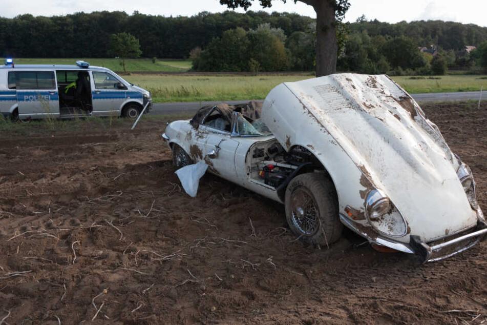 Der Jaguar blieb auf einem Kartoffelacker stehen.