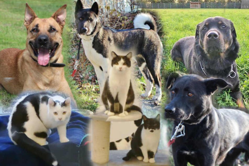 7 Tierheim-Dauersitzer: Warum will niemand diese Hunde und Katzen haben?