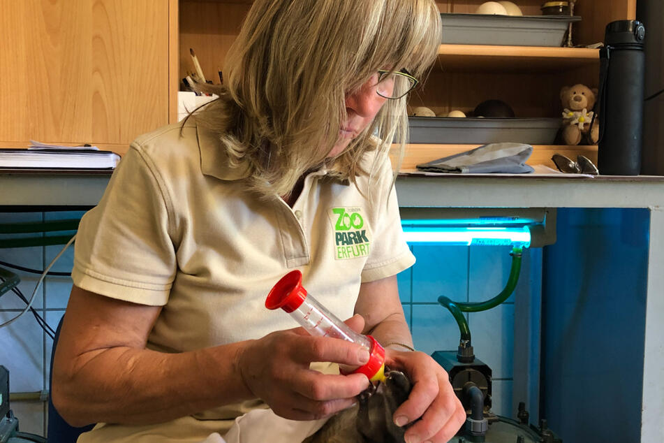 Tierpflegerin Susanne Meyer zieht das kleine Känguru mit der Flasche auf.