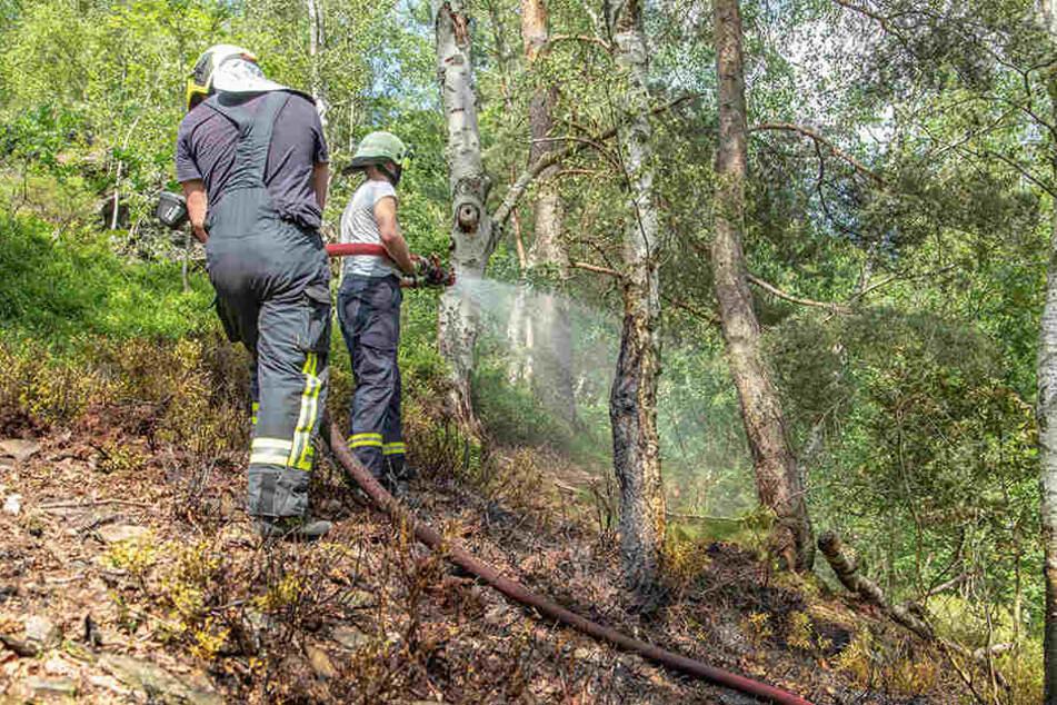 Mehrfach kam es bereits zu Waldbränden in Deutschland - wie hier in Schneeberg Ende Juni.