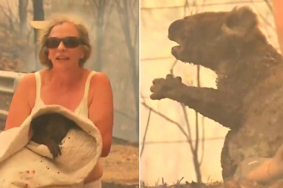 """Er lief direkt in die Flammen! Kleiner Koala """"Lewis"""" verliert Todeskampf"""