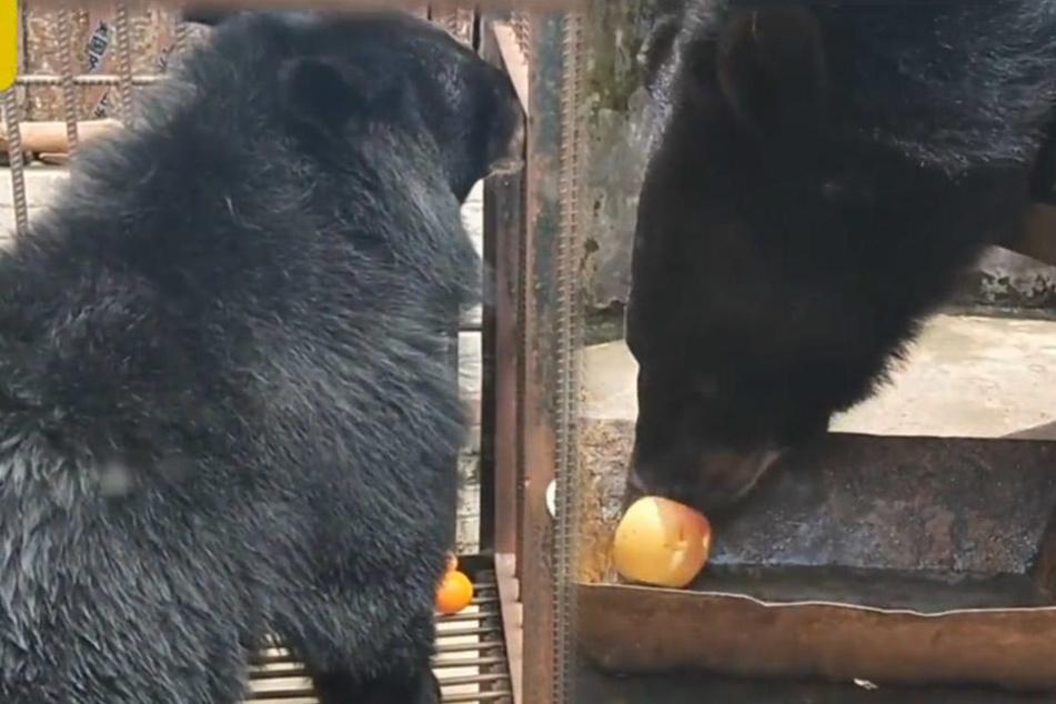 Für einen Hund ist dieser Bär aber riesig ...