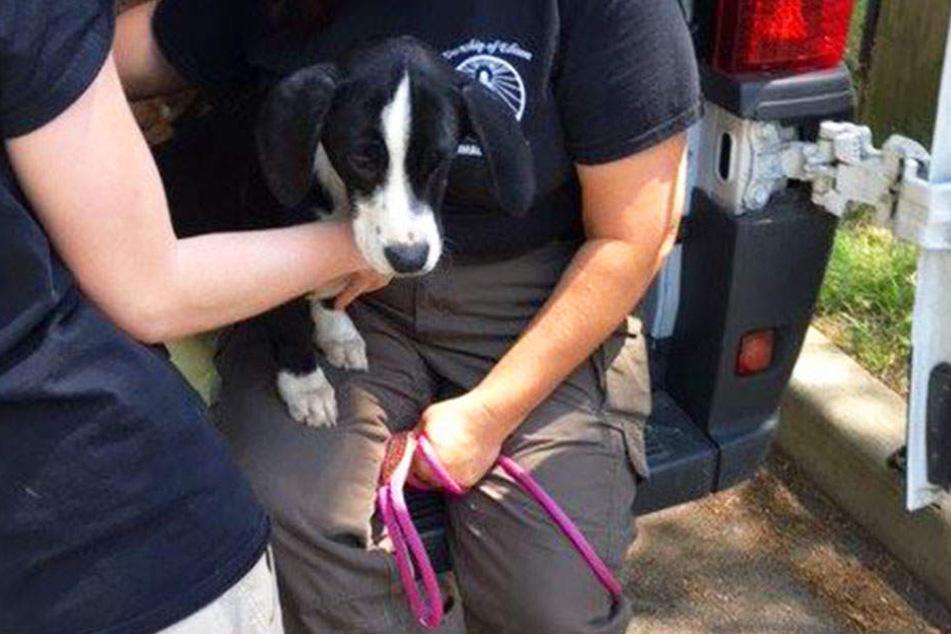 In einem Haus im US-amerikanischen Bundesstaat New Jersey waren über 40 Hunde eingesperrt.