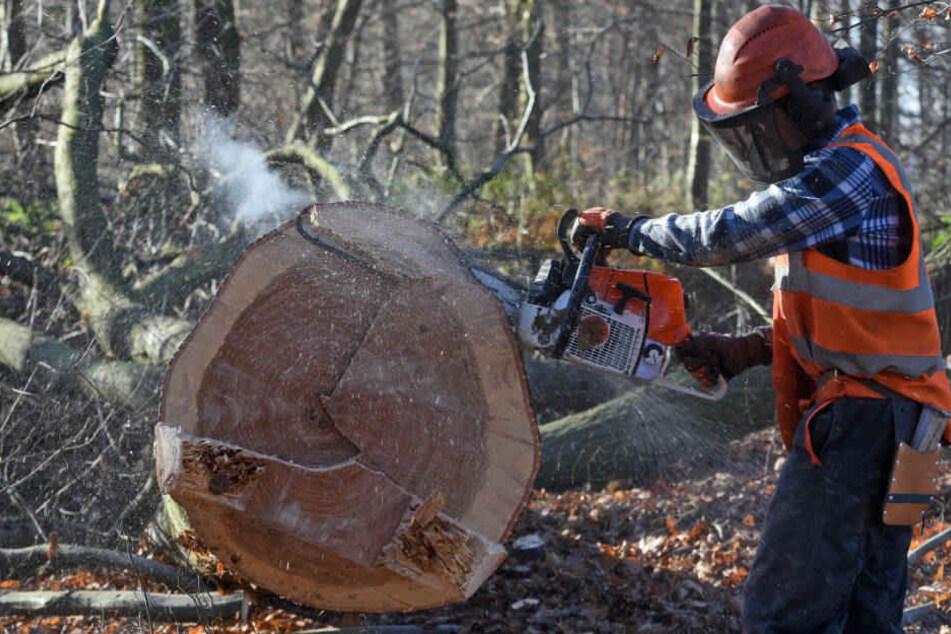 Im Oktober hat das Oberverwaltungsgericht in Münster einen vorläufigen Rodungs-Stopp im Hambacher Forst verfügt.