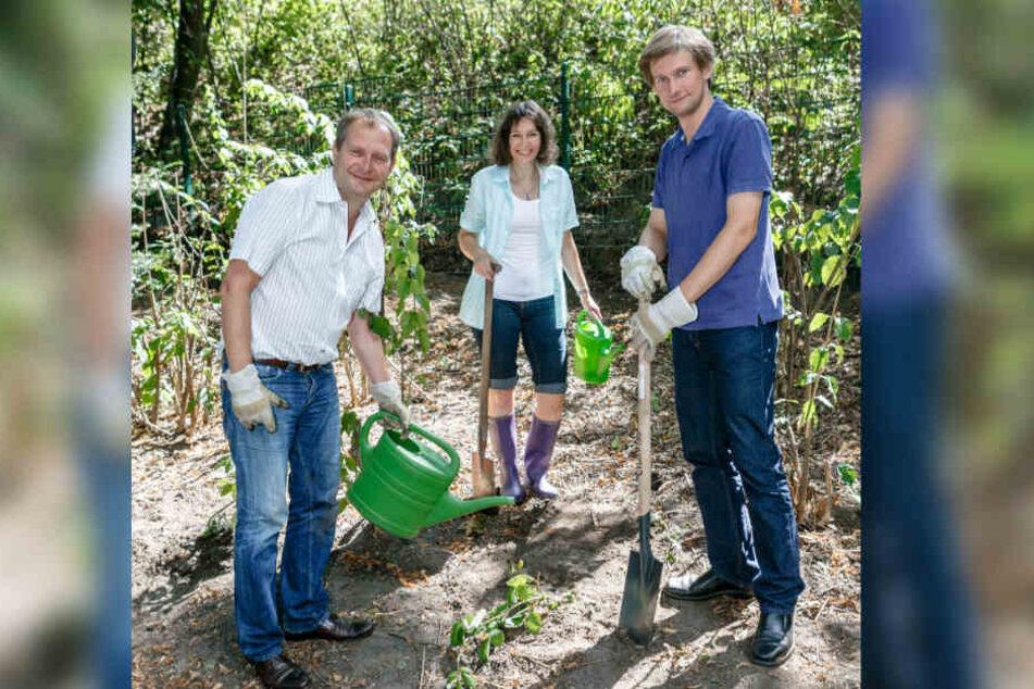 Martin Bill (Grüne, rechts) ist Mitglied der Hamburger Bürgerschaft und posierte hier 2014 mit zwei Parteikollegen in einem öffentlichen Park neben frisch gepflanzten Brombeersträuchern.