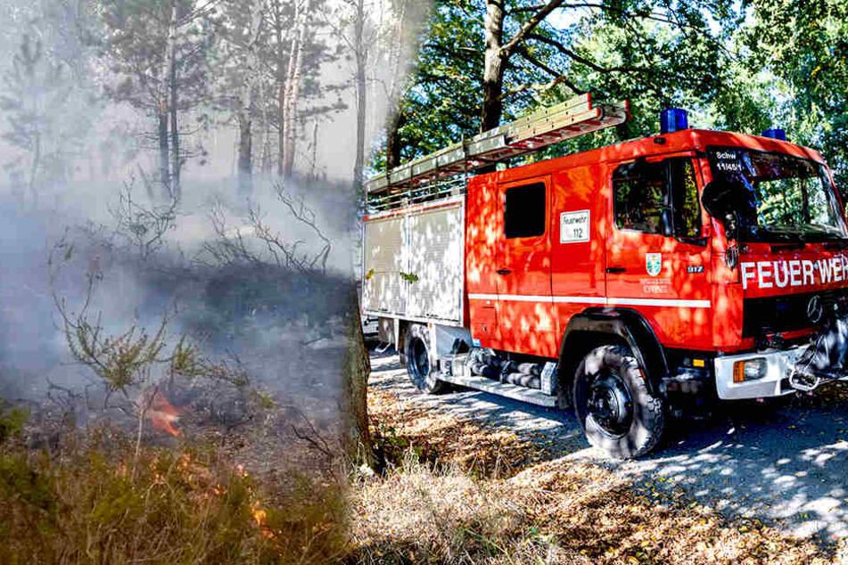 Brand in der Heide: Feuerwehr löscht jetzt mit Sprinkleranlage im Wald