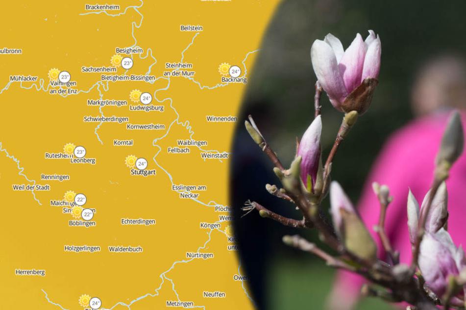 Im Kraichgau und der Kurpfalz könnte es am Sonntag am wärmsten werden.