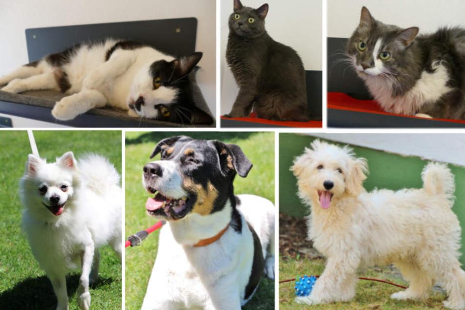 6 besondere Tiere: Diese drei Hunde und drei Katzen musst Du gesehen haben