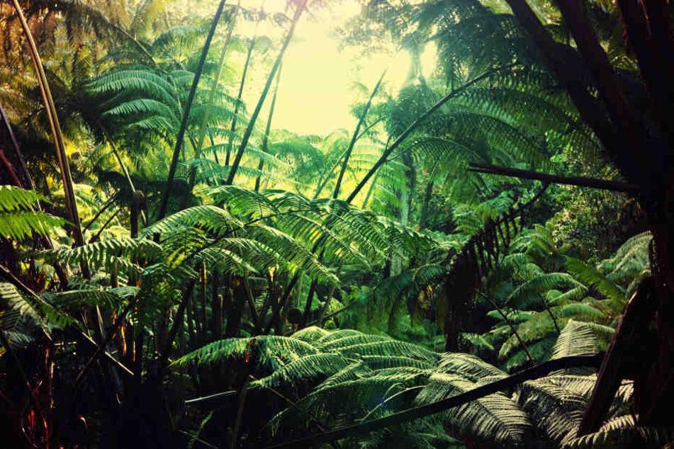 34 Tage lief die Familie orientierungslos durch den Dschungel. (Symbolbild)
