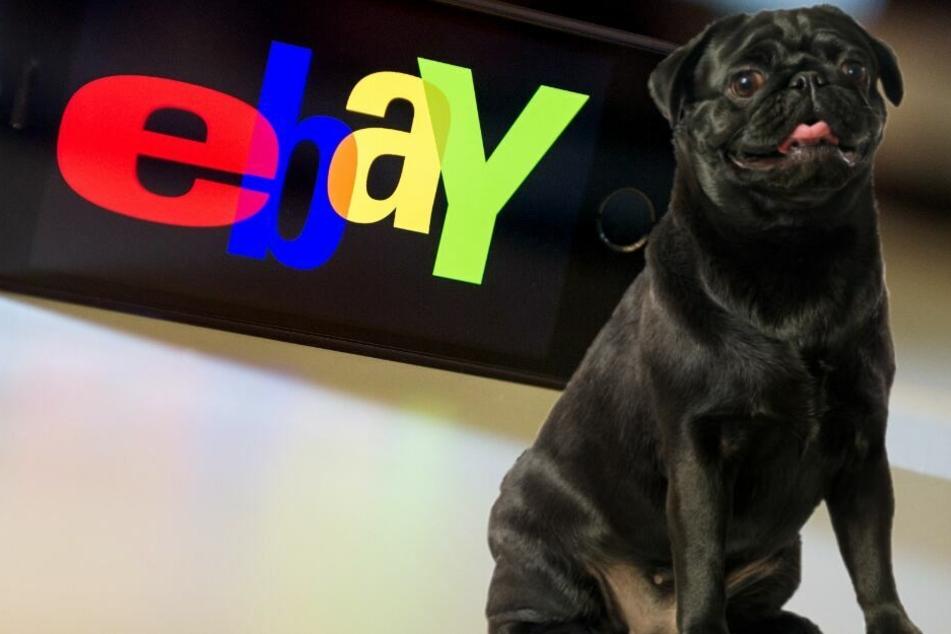 Über Ebay wurde die Hündin verkauft. (Symbolbild)