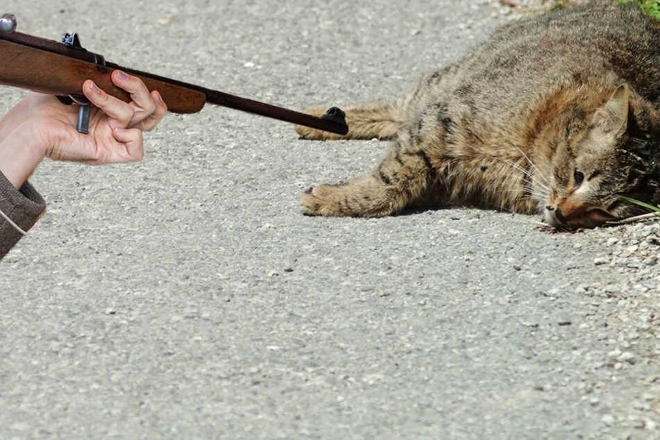Grausam! Katze in Sachsen erschossen