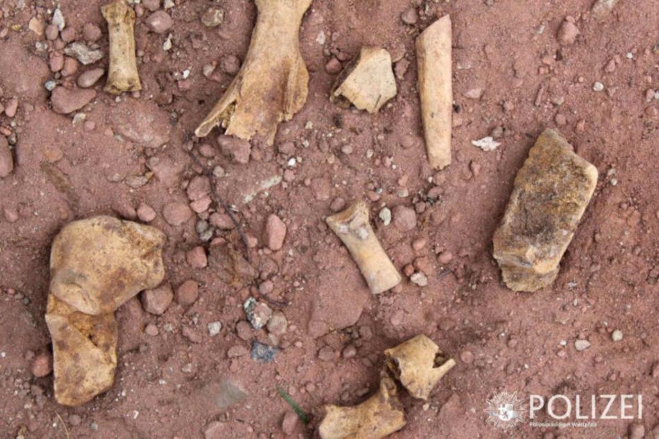 Ersten Untersuchungen zufolge soll es sich bei dem Fund jedoch um tierische Knochen handeln.