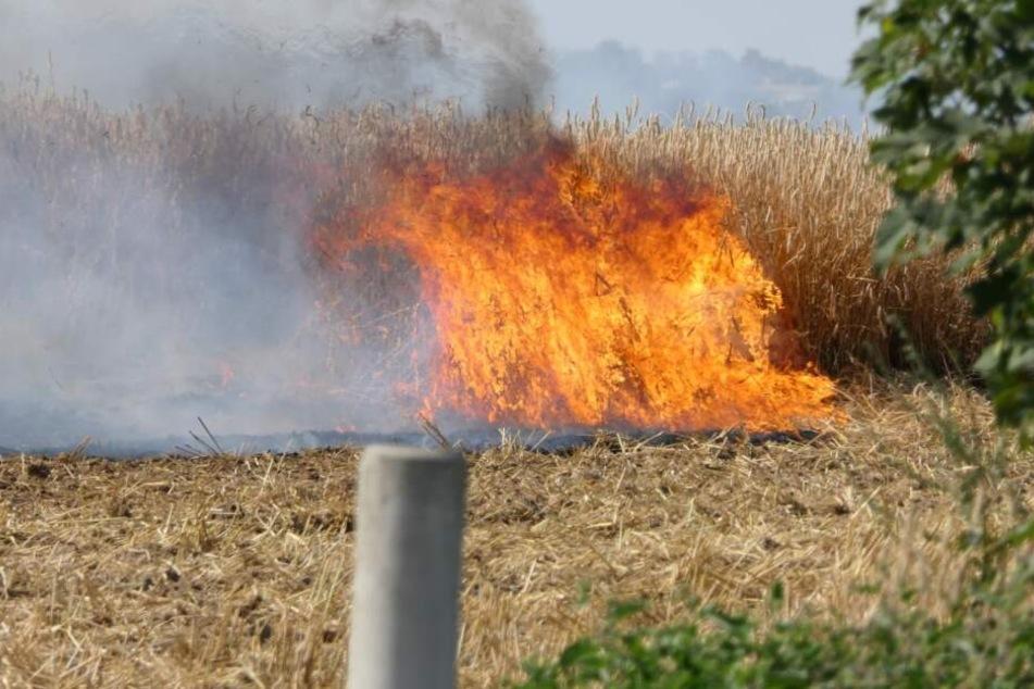 Ein Feld zwischen Taucha und Panitzsch nordöstlich von Leipzig brennt.
