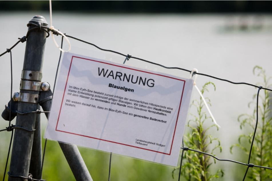 Ein Schild weist auf Blaualgen hin.