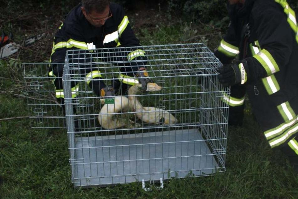 Die Feuerwehr konnte die Schlange einfangen. Die Polizei sucht nun nach ihrem Besitzer.