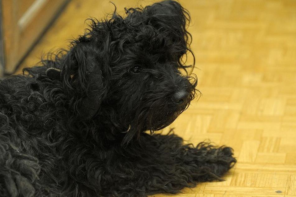 So sollte ein gesunder Hund aussehen (Symbolbild).