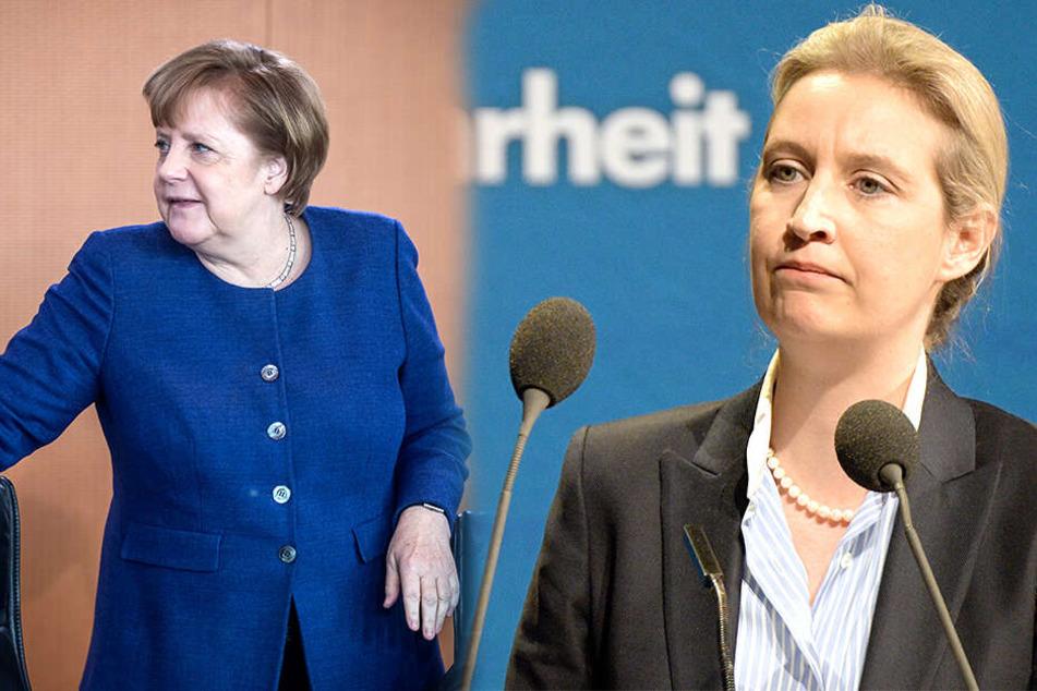 """AfD-Weidel geht auf Merkel los: """"Noch ein Jahr hält dieses Land nicht aus"""""""